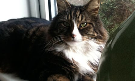 Tom Cox's cat, Ralph