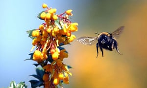 Get The Buzz Spring Flowers Are A Wakeup Call For Bees Life And