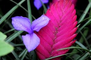 Floriade: Flowers at Floriade