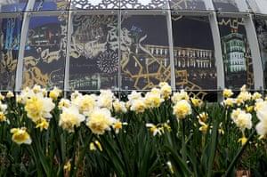 Floriade: Daffodils at Floriade
