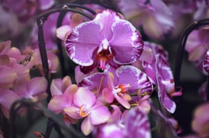 Floriade: A close-up of orchids