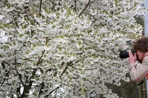 Floriade: A blossoming tree