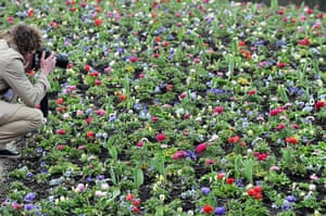 Floriade: A field of flowers