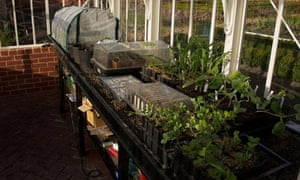 Thomas Hoblyn's overcrowded greenhouse