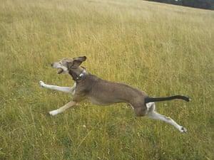 Dog photography: Toyah Warner