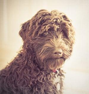 Dog photography: Kirsty Hogan
