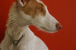 Dog photography: Deborah Rumens