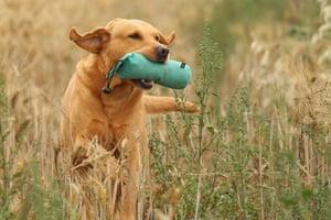 Dog photography: Roz Greening
