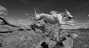 Dog photography: Robert Patefield