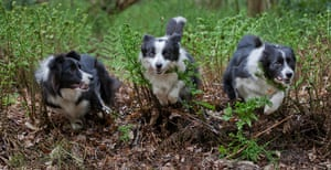 Dog photography: Andy Biggar