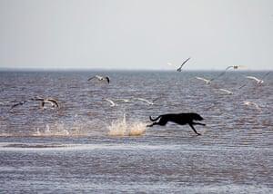 Dog photography: Ian Lambert