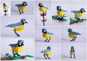 Lego birds: Blue tit made of Lego by Thomas Poulsom