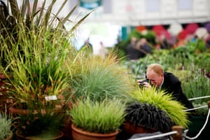 2012 Chelsea flower show: Gorgeous grasses on display