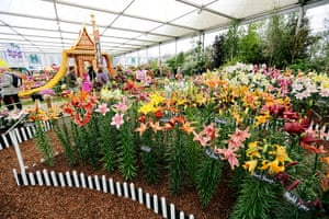 2012 Chelsea flower show: A line of lovely lillies