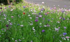 A street meadow