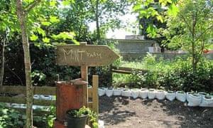 A mint farm at the Blackstock Green House near Finsbury Park station
