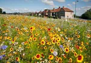New Urban Green: Green Estate Meadows, Sheffield