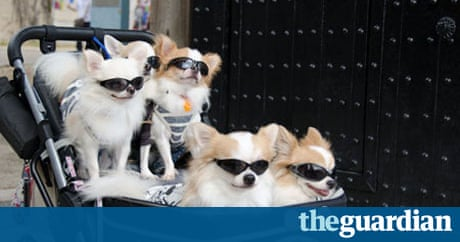 pampered man why japan prefers pets to parenthood life and style the guardian