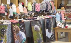 Designer clothes for dogs