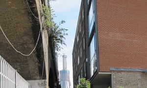 Buddleja: Buddleja growing on a building in London with the Shard in the background