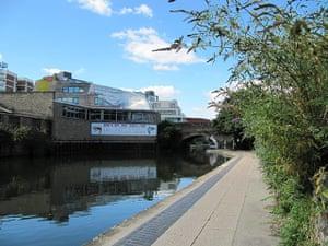 Buddleja: Buddleja growing along the Regents Canal in London