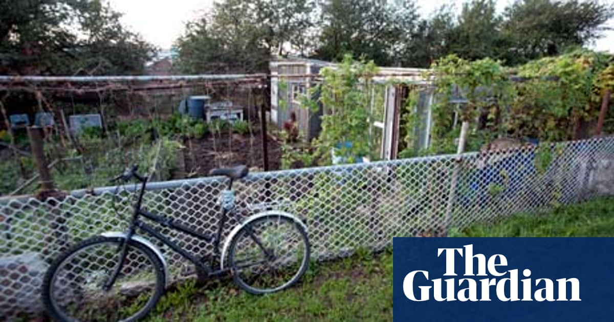 How To Plant A Low Maintenance Allotment Life And Style The