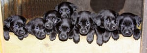 Puppy Awareness Week: Stan Wilson's puppies