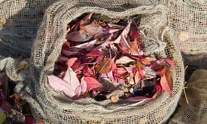 Autumn leaves collected in jute bags