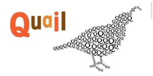 Alphabet : Q is for quail