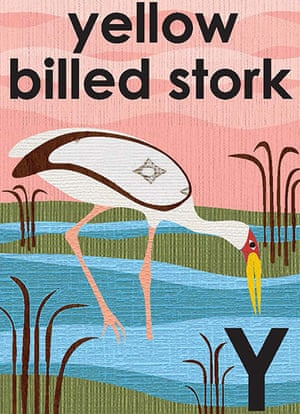Alphabet : Y is for yellow billed stork