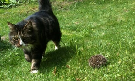 Ralph and the hedgehog