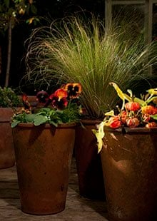 Gardens: winter pots with a difference | Life and style