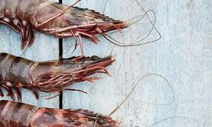kitchen tips: prawns