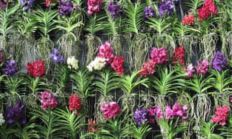 A wall of vanda orchids at Kew gardens' orchid extravaganza 2013