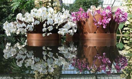 Moth orchids at Kew's orchid extravaganza 2013