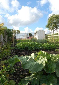The vegetable garden at Pig Row