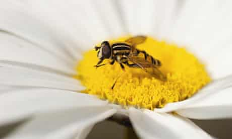 Insect from the Wildlife Gardener by Kate Bradbury