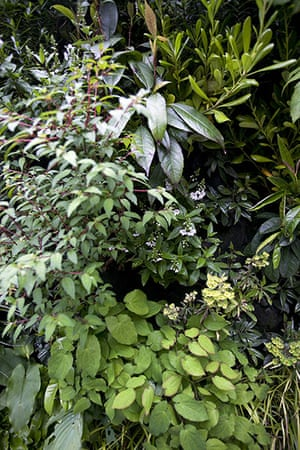 Living wall: Fuchsia, parahebe, euphorbia and epidemiums