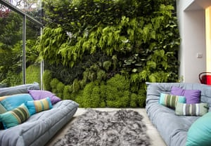 Living wall: The indoor section of the wall