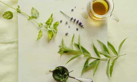 10 bes t herb MAIN PIC: Lemon verbena, lemon balm and lavender tea