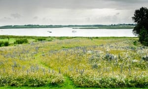 Wildflower meadow in Aldeburgh
