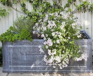 Tiny courtyard garden: A lead trough planter