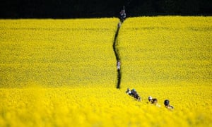 Field of oilseed rape on the Race to the Stones route