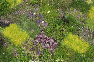 Floral lawn: Floral lawn at Avondale Park, London