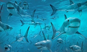 A shiver of great white sharks.
