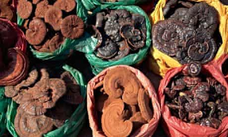 Mushrooms for sale at a herbal medicine shop in China