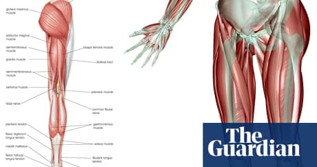 Running into problems: iliotibial band friction syndrome | Life and ...