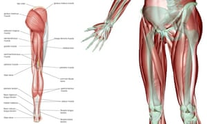 The anatomy of the leg, including that often-pesky old ITB band