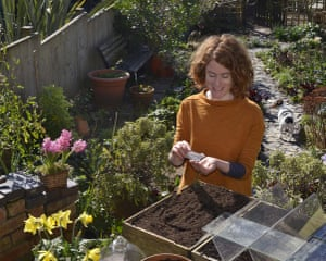 Summer of salads: Alys Fowler sows lettuce seed