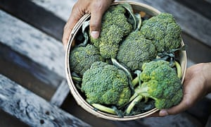 Grow your own Woodstock New York USA Organic Broccoli just harvested